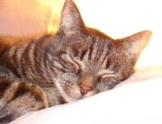 warm-glowing-cat-1392714